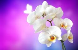 Accountmanager orchideeen