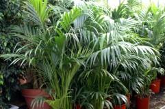 Productiemedewerker plantenkwekerij